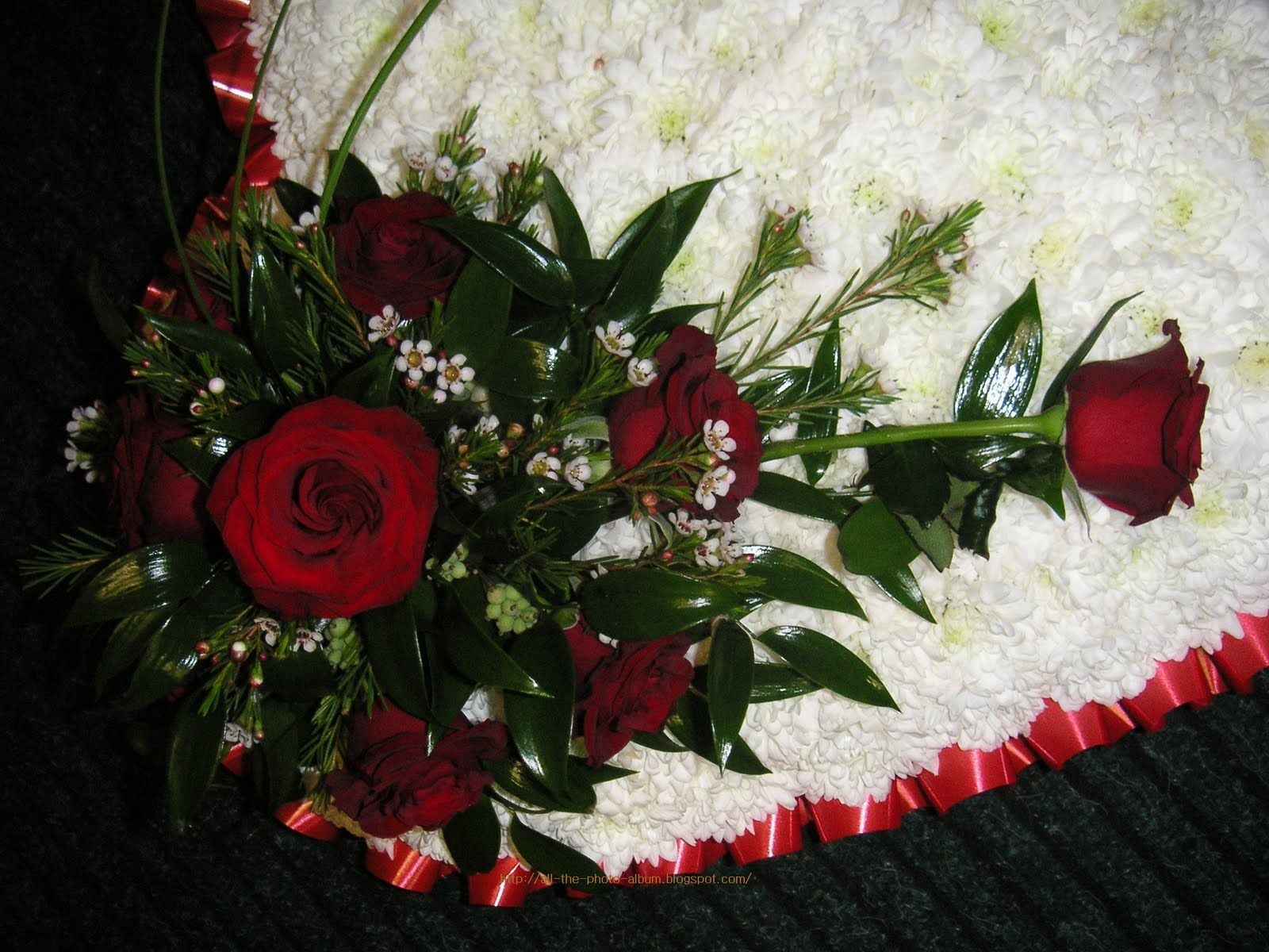 My Beautiful Picutre Album Velvety Smooth Dark Red Rose