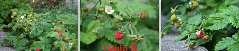 Mahlin78