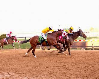 Spicer Cub yarış atı