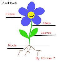 http://wsgfl2.westsussex.gov.uk/aplaws/intergames/plant/Plant.swf