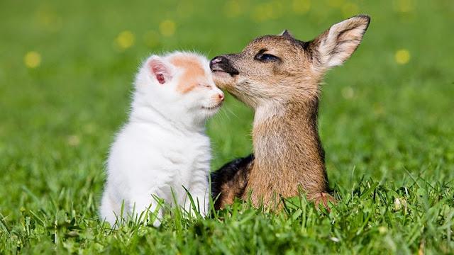 Fotografías divertidas de animales