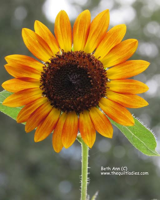 Make me Happy with a Flower (c) Beth Ann Strub