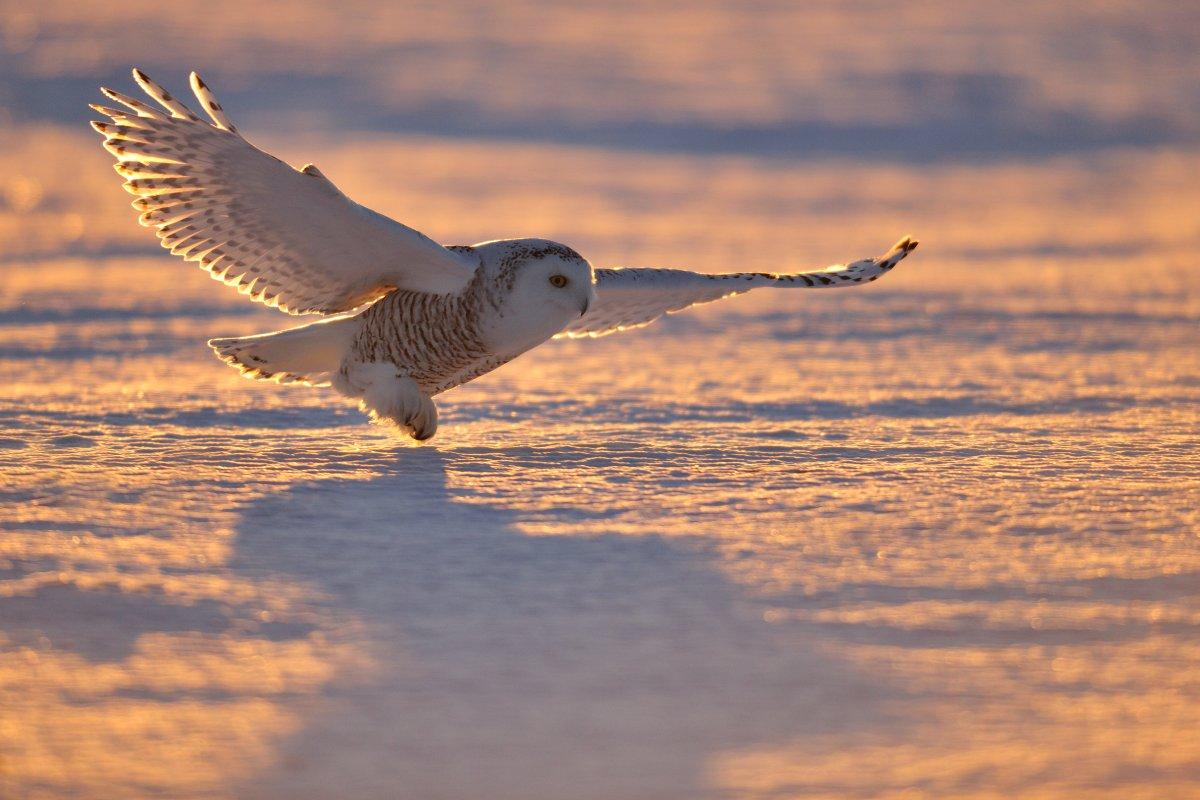 Imagem do dia - Página 39 Photo_Animal_Wildlife+(5)