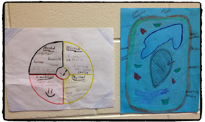 aboriginal perspective in science, aboriginal perspective in biology, incoporating the medicine wheel into science class