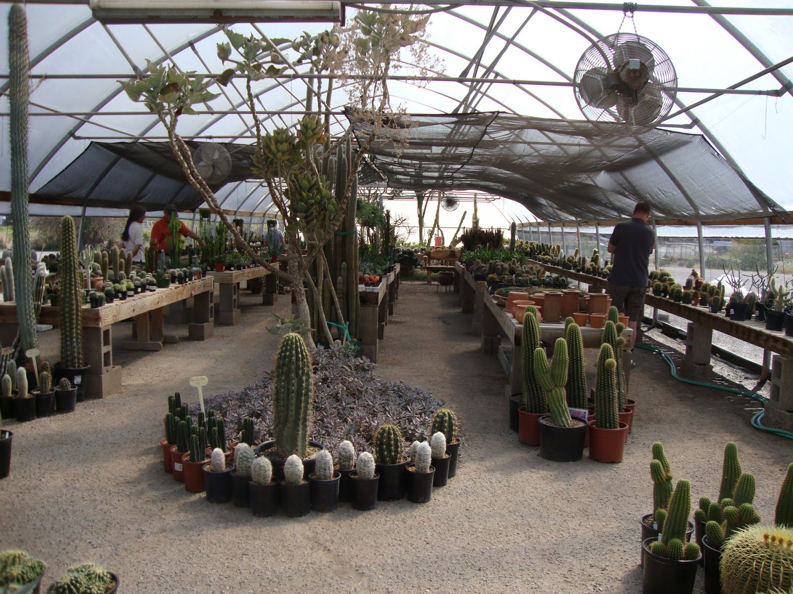 Last Time We Visited T Or C The Nursery Was Closed But Still Poked Around Looked At Plants Outside And Ked In Greenhouse