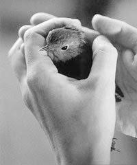 El pájaro no tiene nombre/he igual marcha por el bosque