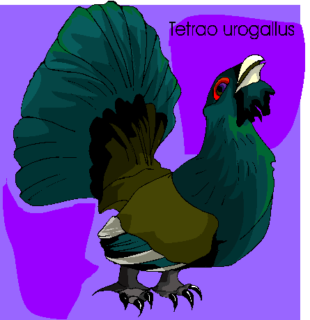 Tetrao Urogallus Free Bird Clipart