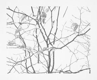 Richard Müller: Plantes dépassant la neige crayon sur papier
