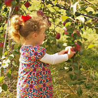 Apple Picking New England Fall Events