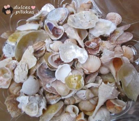Conchas y Caracolas de Mar. Peque�os tesoros.