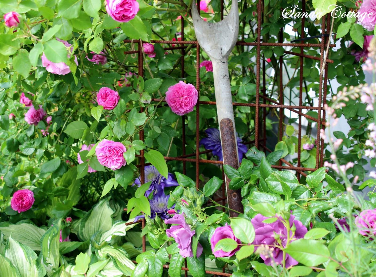 Bildresultat för prunkande trädgård rosa