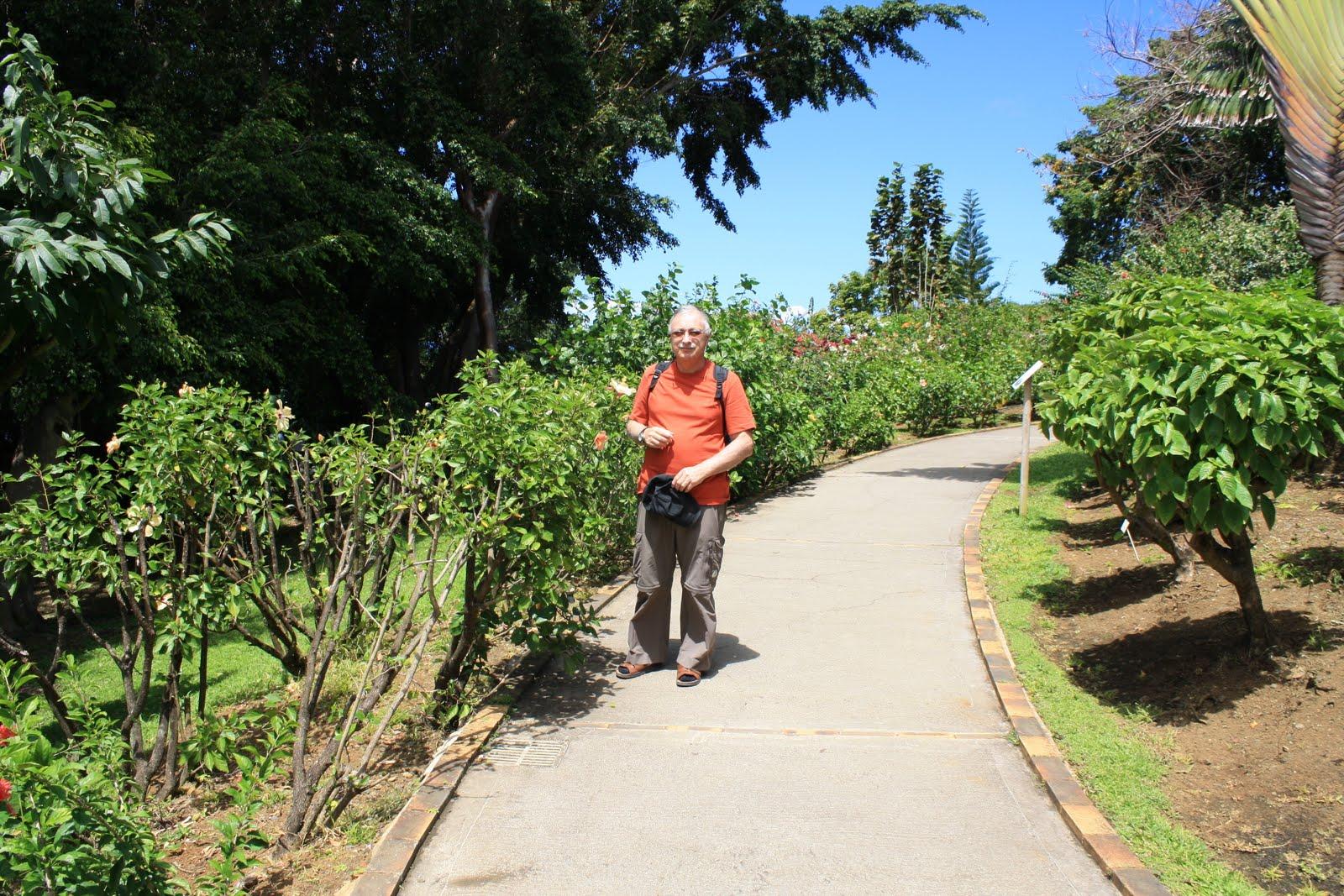 Vacances dans l 39 ile papillon le jardin botanique de for Le jardin ou l on s attarde