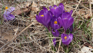 [ signs of spring ]