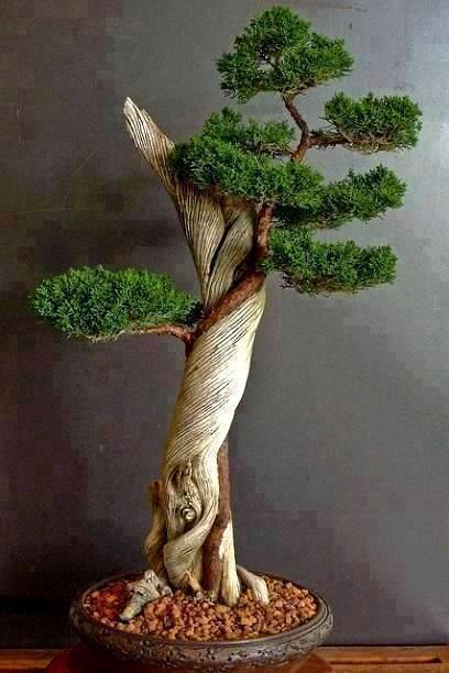 pohon bonsai yang bagus dan menarik