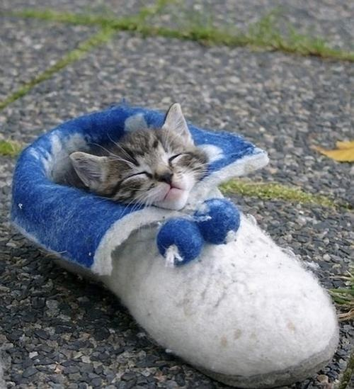 Little kitten sleeping in a shoe