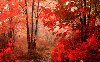 Red Leaves Trees Forest HD Wallpaper