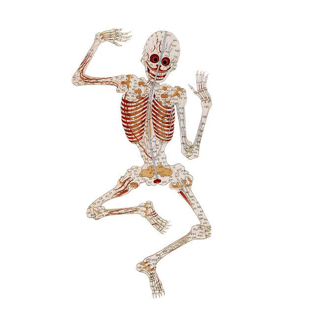esqueleto, puntos, tibet, ilustracion