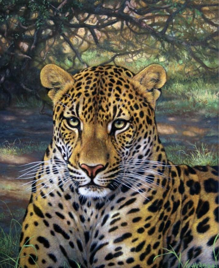 Galeria De Pintura Al Oleo: Cuadros, Pinturas, Oleos: Galería: Pinturas De Tigres