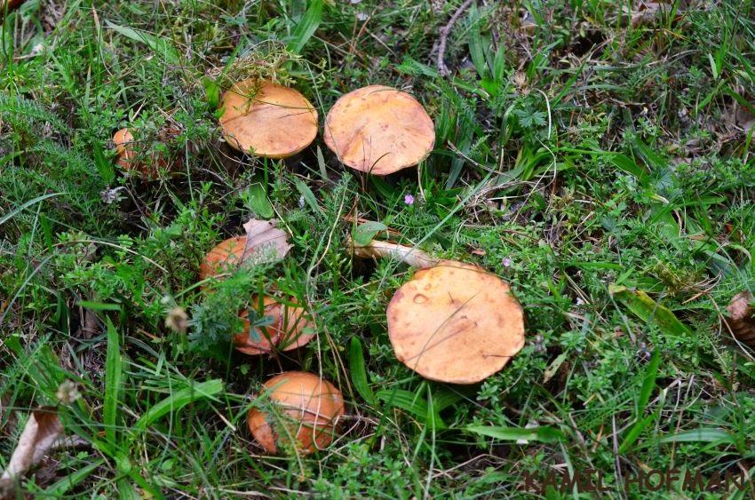 przyrodniczek pl blog przyrodniczy krajoznawczy