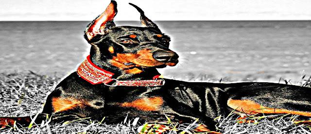 liste des chiens de garde