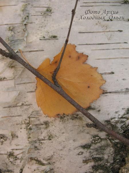 Желтый листик
