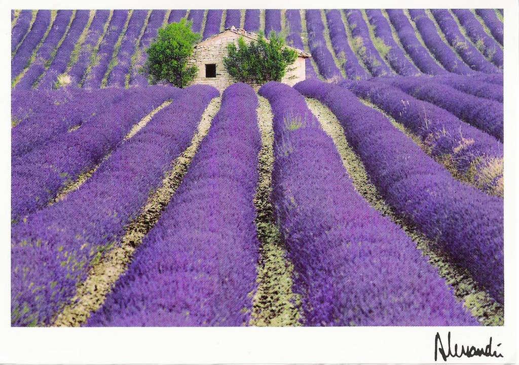 http://2.bp.blogspot.com/-CvspDbhtOj4/UeoNoADOphI/AAAAAAAABU4/Lys6vOmktQI/s1600/Lavender+fields+Provence+-+France+(3).jpg