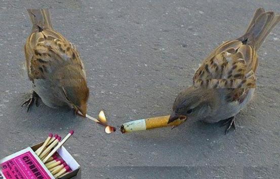 Cigarette Pine ke Hanikaarak Prabhav