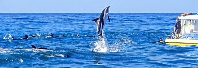 Costa de Kaikoura en Nueva Zelanda