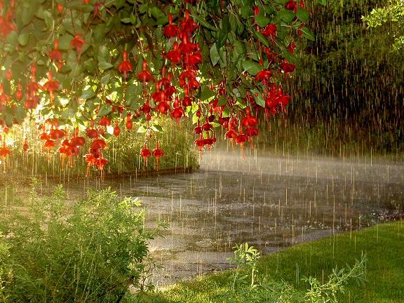 Βροχή φθηνόπορο πίνακας ζωγραφικής