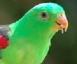 Short essay about parrot in 200 words