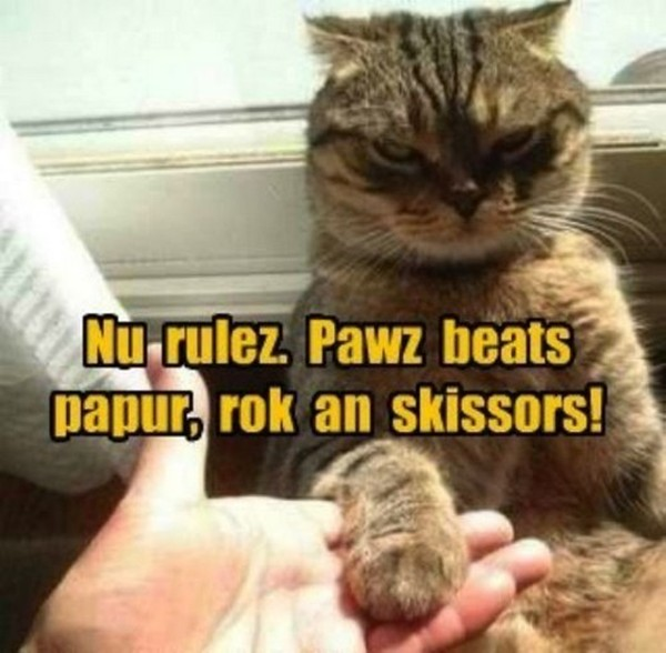 30 Funny Animal Captions 30 Pics Funny Photos Funny Mages Gallery