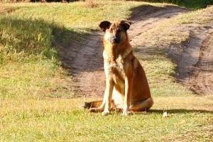 vaksinasi rabies pada anjing dan kucing