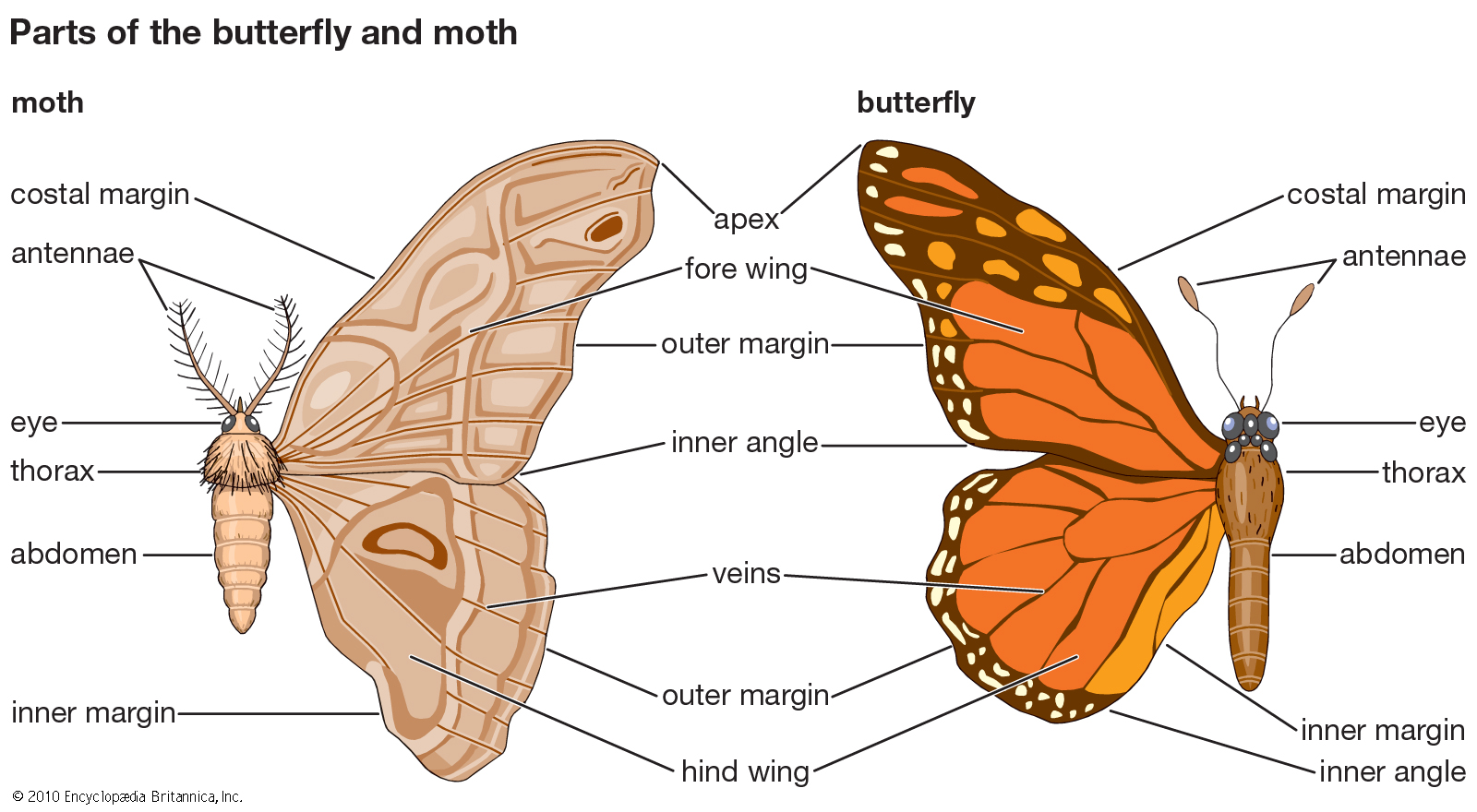 Do you know your moths from your butterflies? - Science in the City