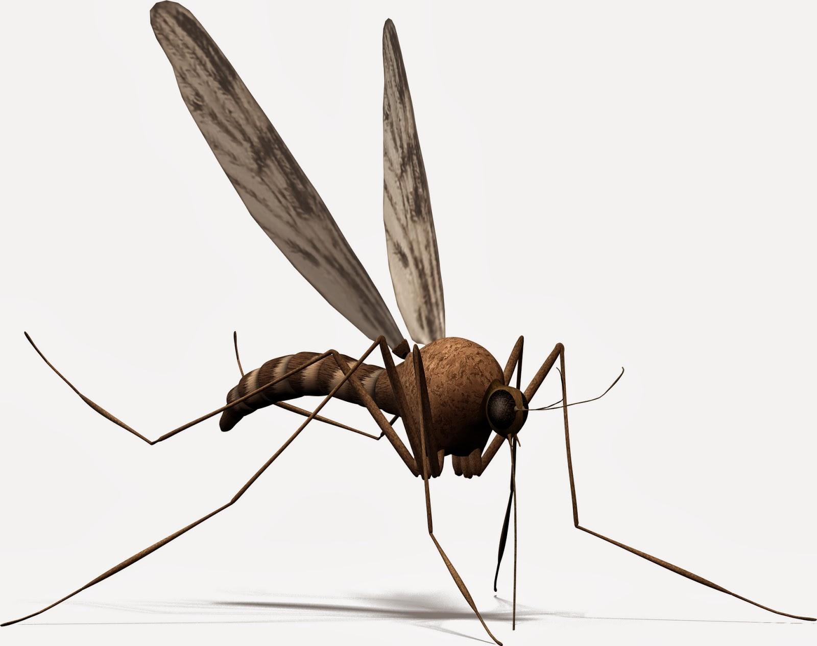 mosquito, mosquito misting system, chikungunya virus