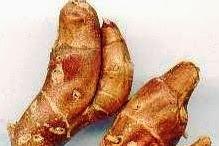 Tenggorokan Gatal, Batuk: Kencur Segar dan Garam Dikunyah