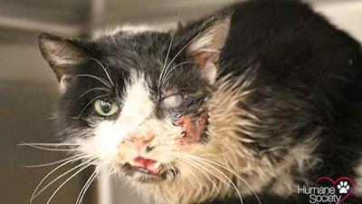 """""""Νεκρή"""" γάτα βγήκε από τον τάφο της πέντε ημέρες μετά την ταφή της"""