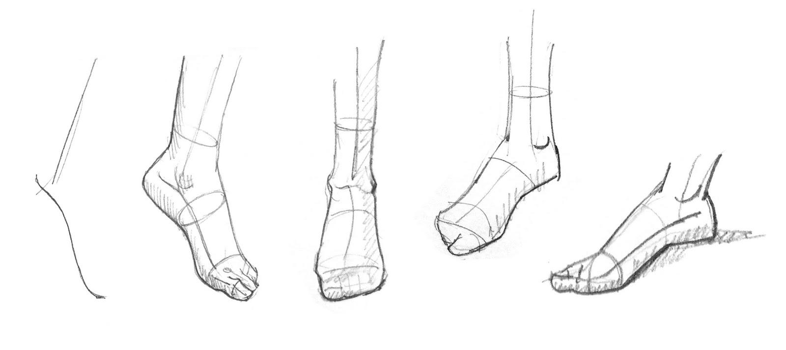 Figure anatomy drawing