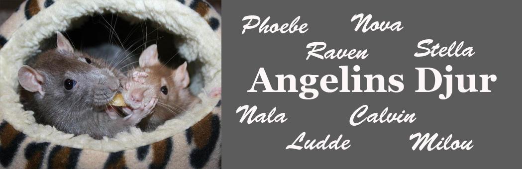Angelins djur