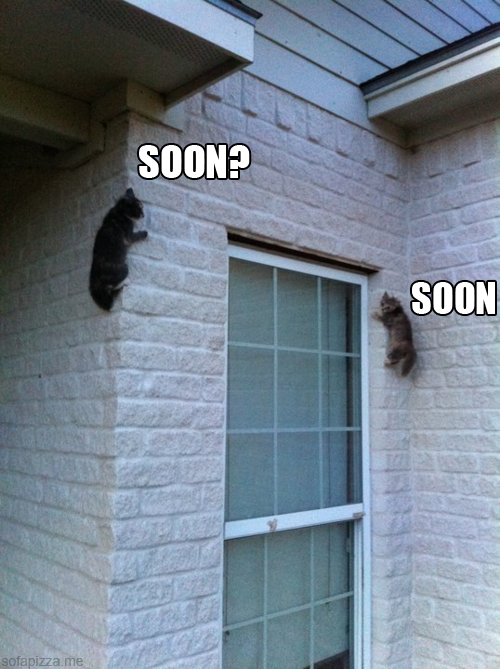 cat s photo Photo