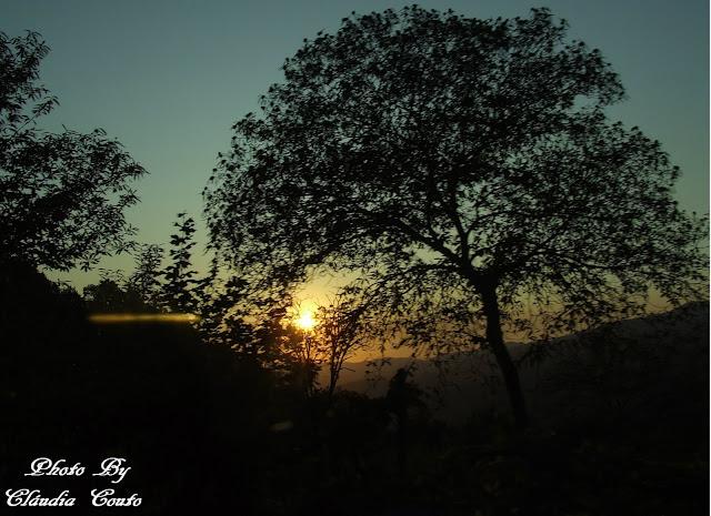 Uma fotografia que deixa espelhar a luz do sol por entre os ramos da arvore e a percorrer toda a montanha. O raio que atravessa e se mostra quente pela sua cor.