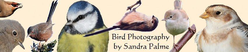 A birder's blog