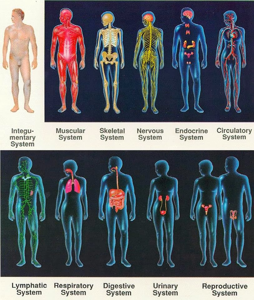 Physio Health: ORGAN SYSTEMS REVIEW