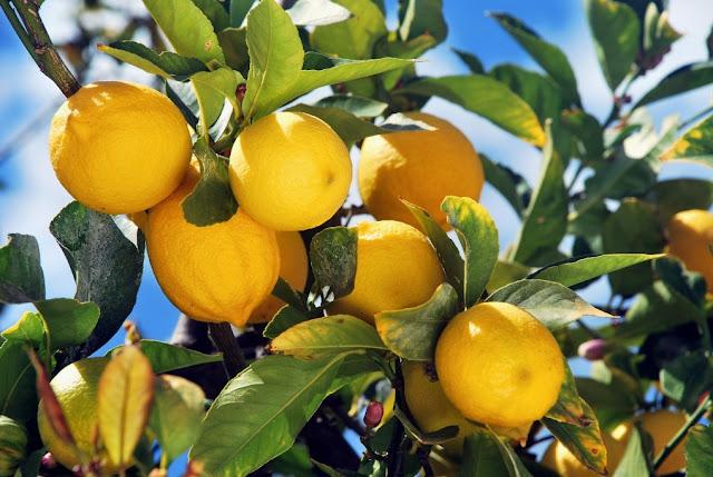 Sorrento limoni
