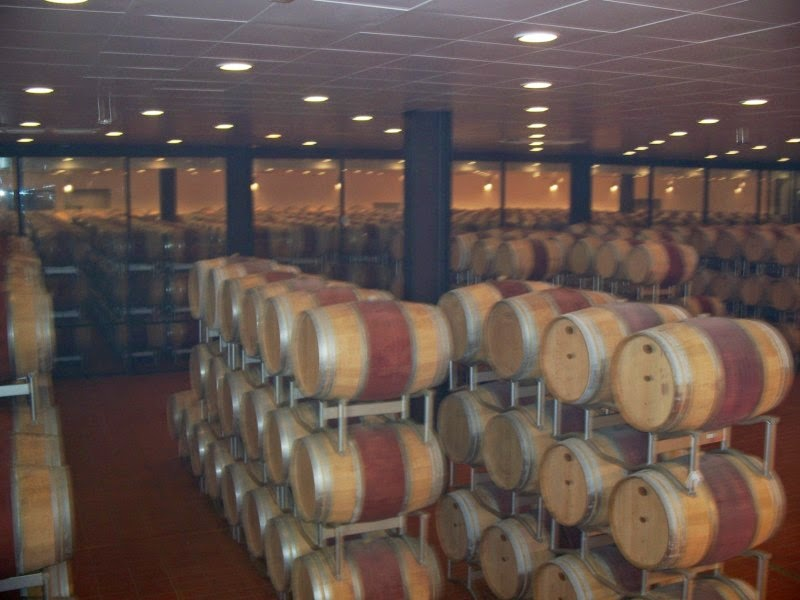 Barrel room of Poliziano winery Montepulciano