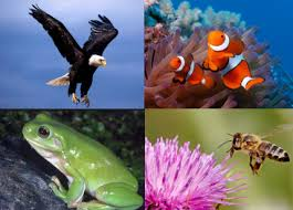 Macam-Macam Perkembangbiakan Secara Generatif Pada Hewan
