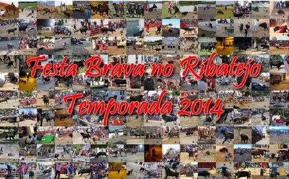 """Festa Brava no Ribatejo- """"A foto da Temporada 2014 é ..."""""""