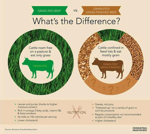 Grass-fed vs grain-fed beef