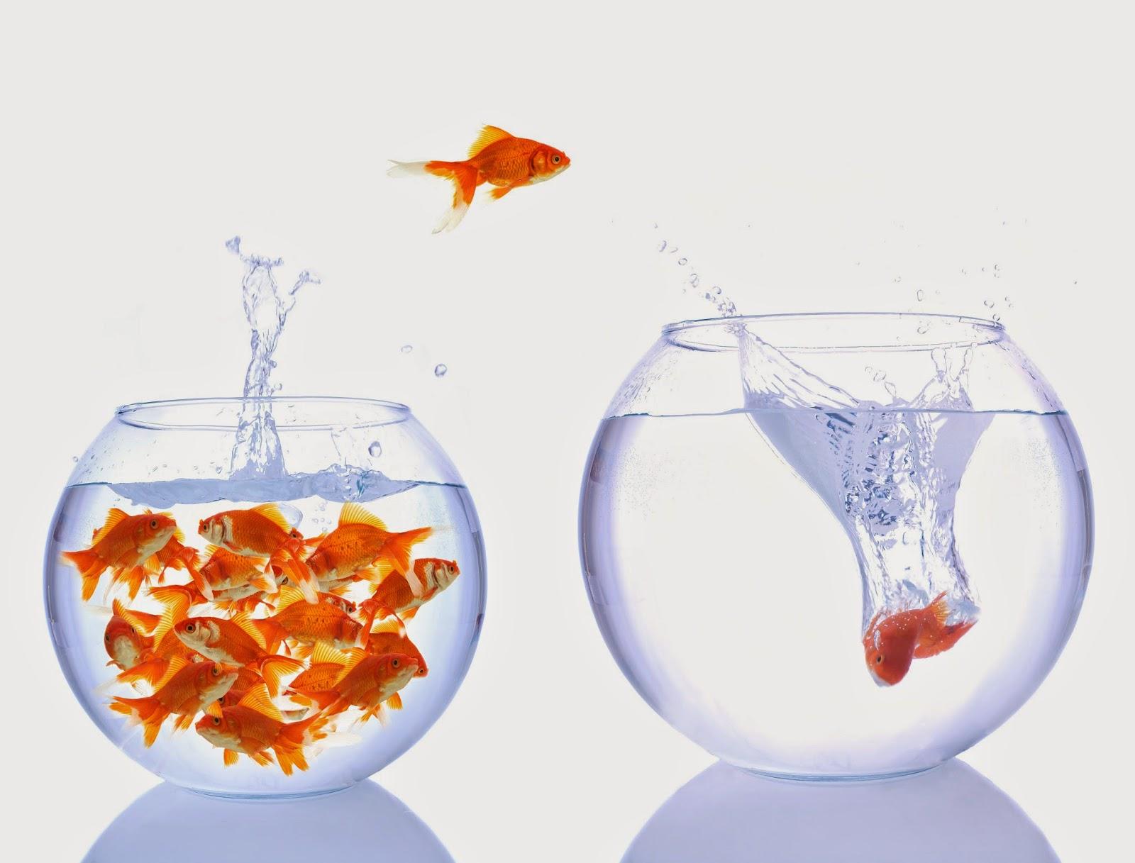 Berufseinstieg bei der Allgeier Productivity Solutions
