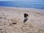 Dog Friendly Beach
