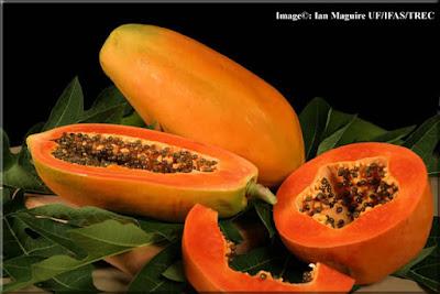 [imagetag] http://2.bp.blogspot.com/-CzrnqIwoSdo/Tk9zz9nJJvI/AAAAAAAAAGU/DiF1tPOykqk/s1600/papaya-lg.jpg